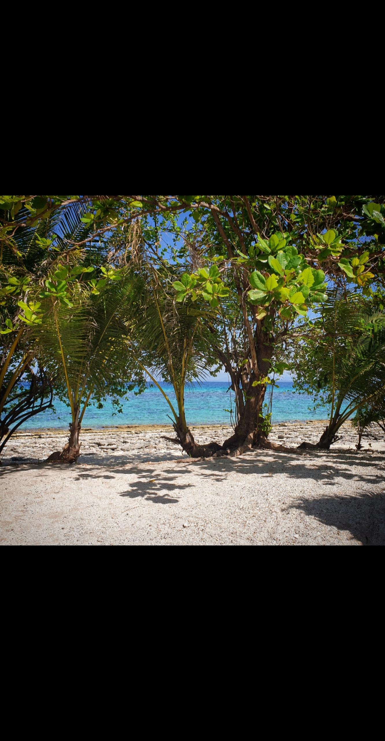 Isola di Malapasqua, Olgiata Diving Febbraio 2020, People 33